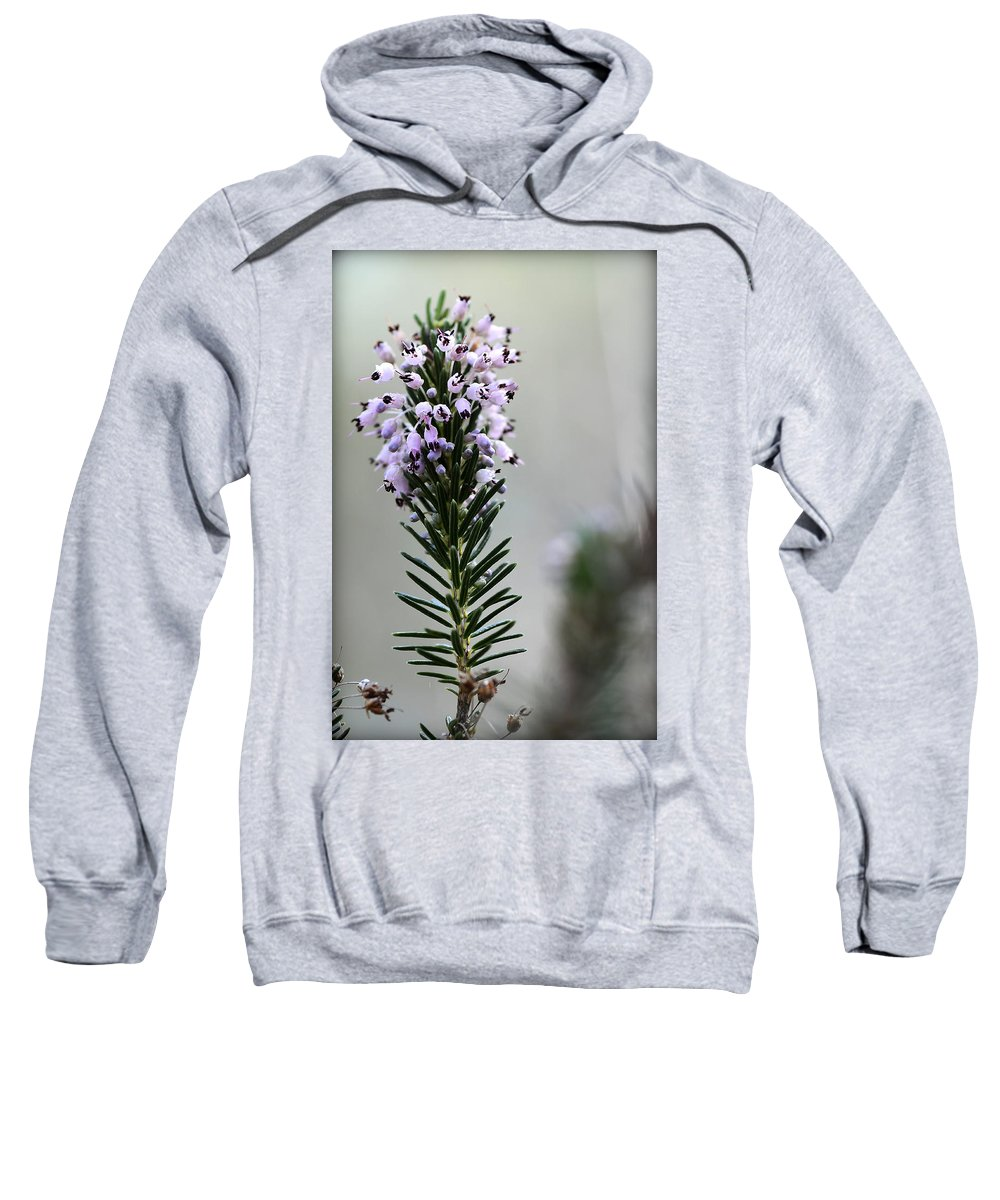 Menorca Sweatshirt featuring the photograph Lil Flower In Lilac by Pedro Cardona Llambias