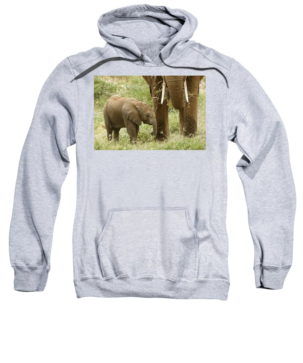 Africa Sweatshirt featuring the photograph Little Ellie by Michele Burgess