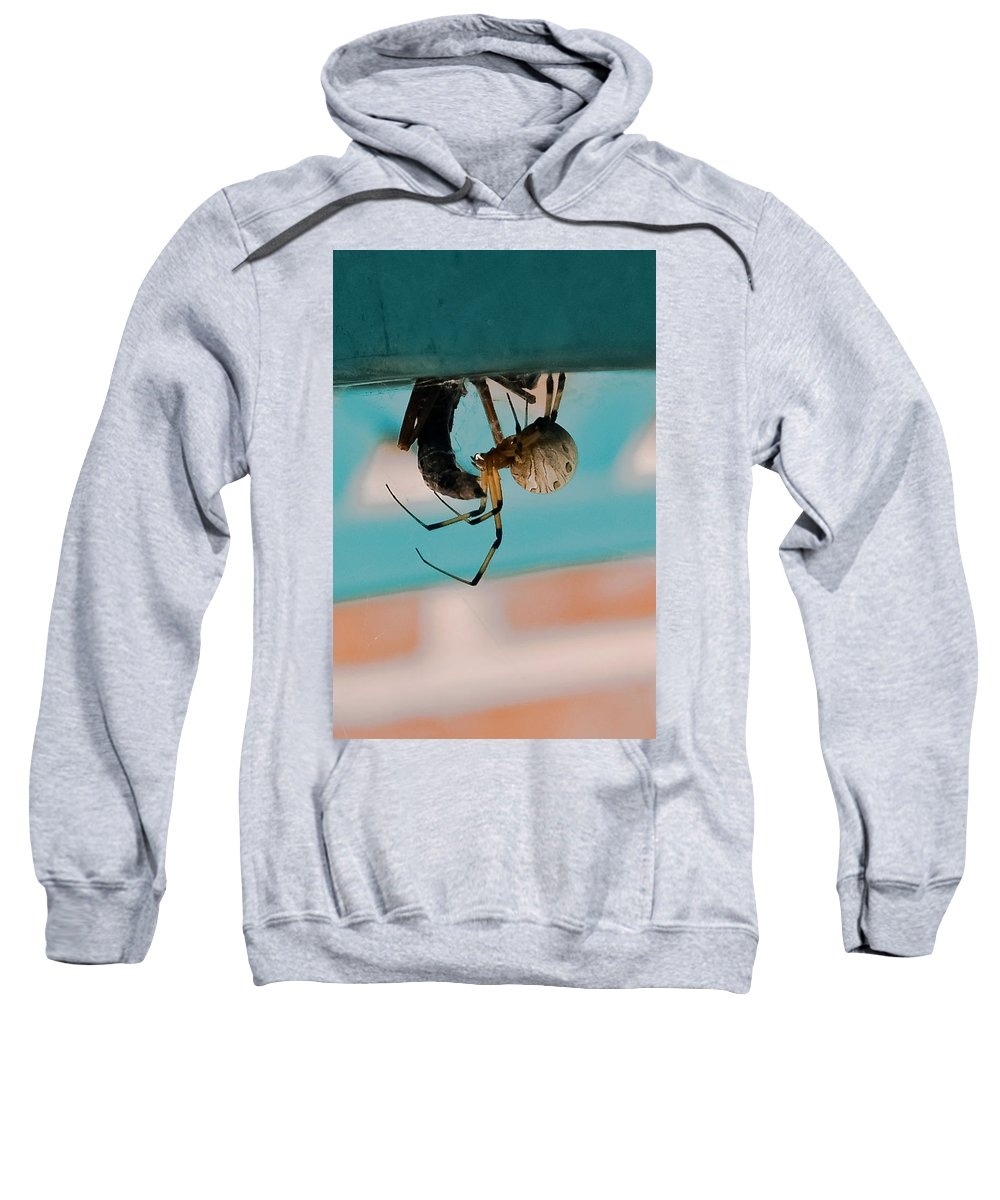 Spider Sweatshirt featuring the photograph Little Miss Venom by DigiArt Diaries by Vicky B Fuller