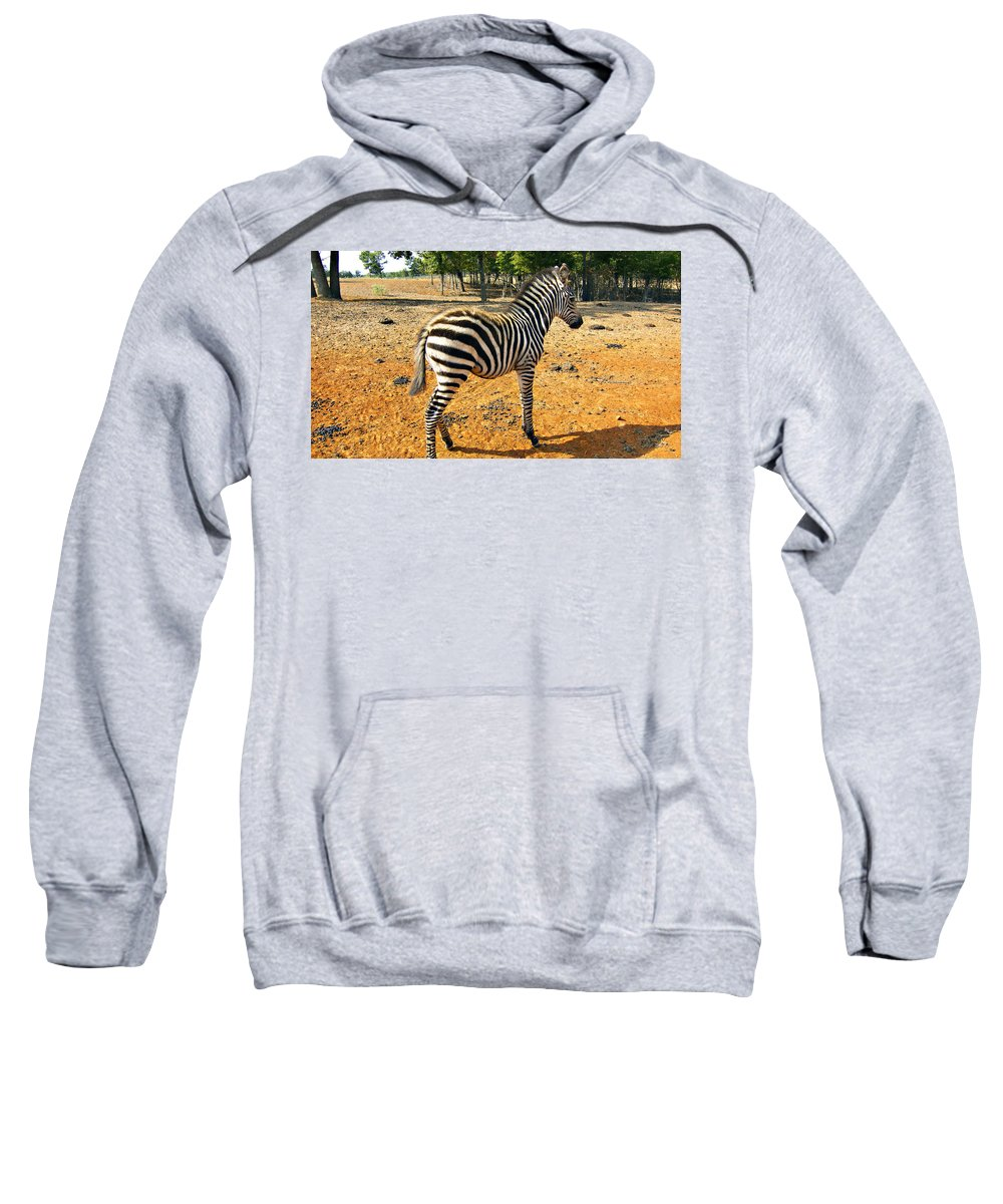 Juvenile Zebra Sweatshirt featuring the photograph Little Stripes by Douglas Barnard