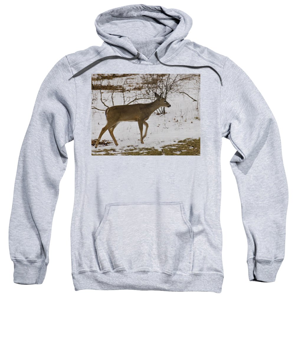 Usa Sweatshirt featuring the photograph Little White Tails Mama by LeeAnn McLaneGoetz McLaneGoetzStudioLLCcom