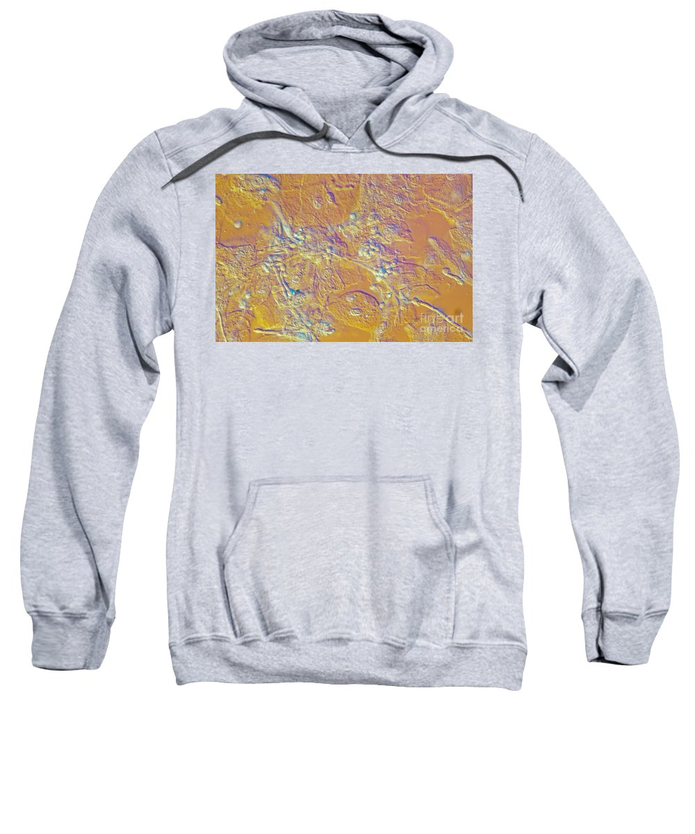 Nomarski Interference Contrast Sweatshirt featuring the photograph Living Candida Albicans by M. I. Walker