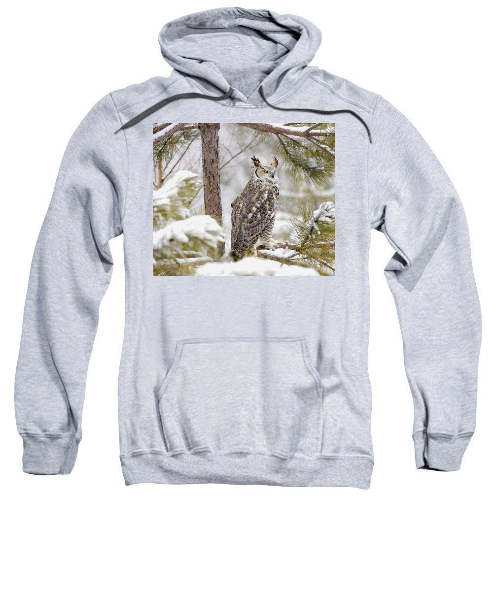 Dignity Sweatshirt featuring the photograph Long Eared Owl by John Pitcher