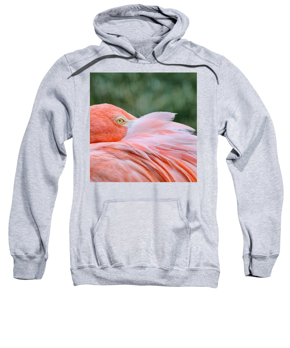 Pink Flamingo Sweatshirt featuring the photograph Looking At You by Kim Hojnacki
