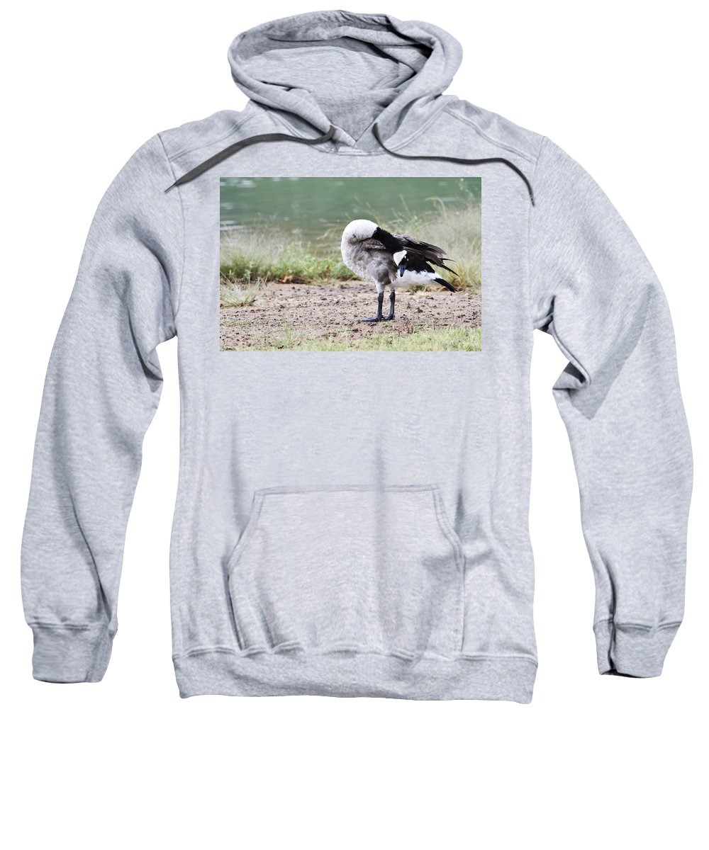 Canadian Goose Sweatshirt featuring the photograph Looking Back by Douglas Barnard
