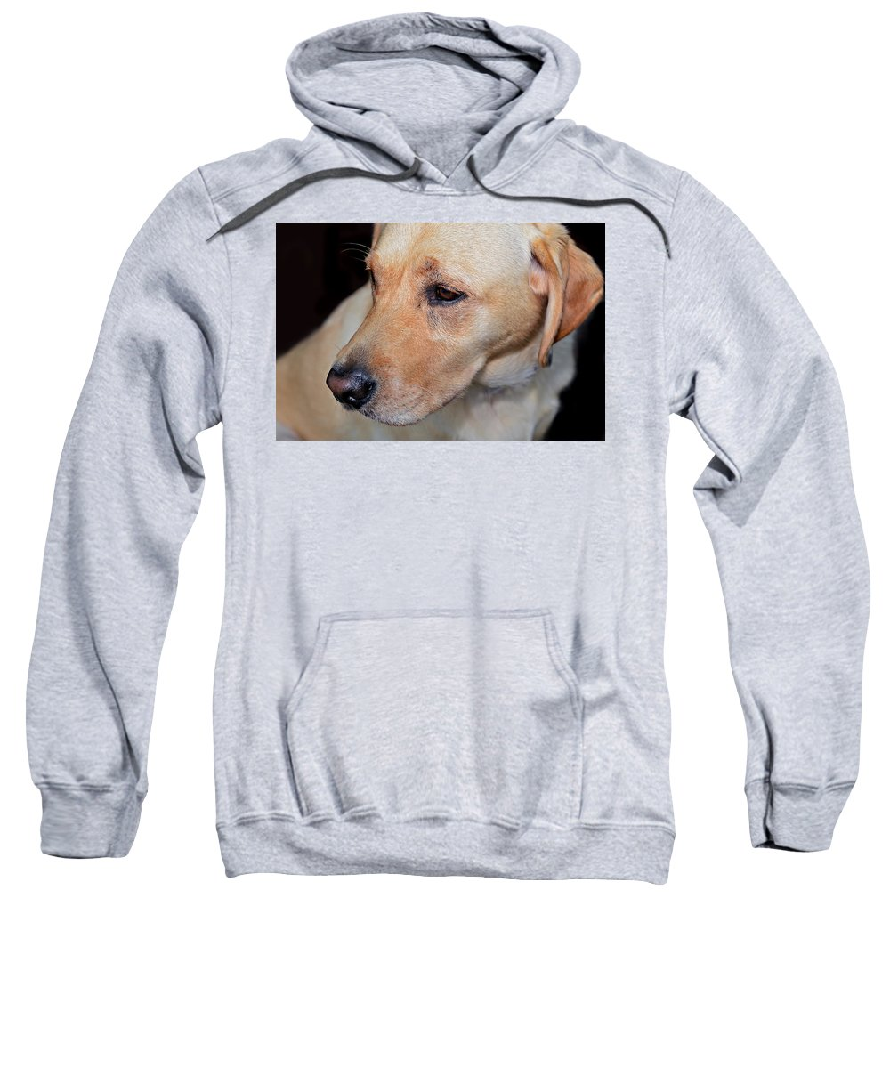 Animal; Retriever; Golden; Dog; Pet; Canine; Purebred; Mammal; Pedigree; Domestic; Breed; Cute; Background; Friend; Doggy; Fur; Beige; Labrador; Looking; Blond; Friendly; Adorable; Yellow; Sweet; Companion Sweatshirt featuring the photograph Looking Back by Susan Leggett