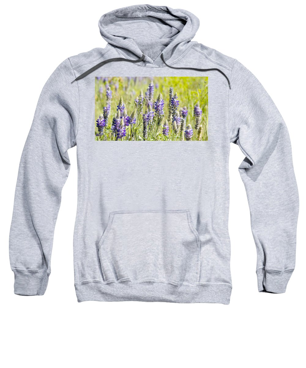 Lupine Sweatshirt featuring the photograph Lupine 2 by Dianne Phelps