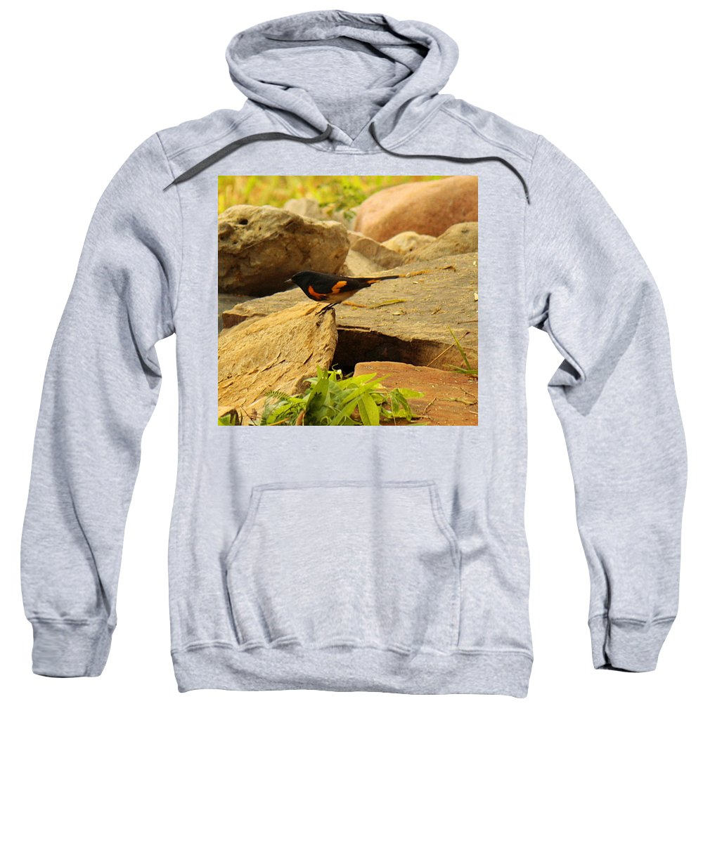 Roena King Sweatshirt featuring the photograph Male American Redstart On The Rocks by Roena King