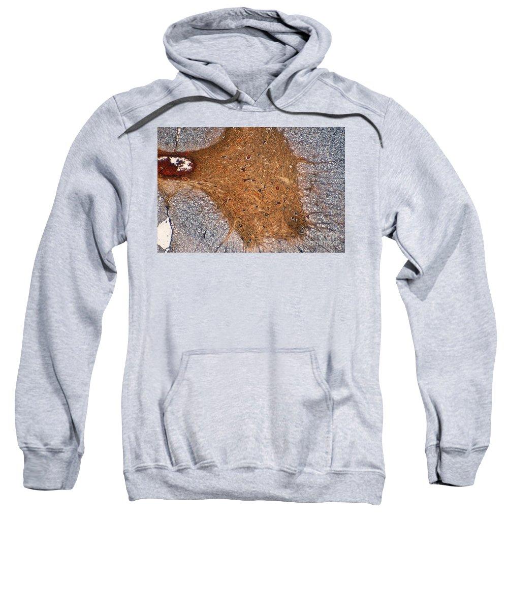 Mammalian Histology Sweatshirt featuring the photograph Mammalian Histology by M. I. Walker