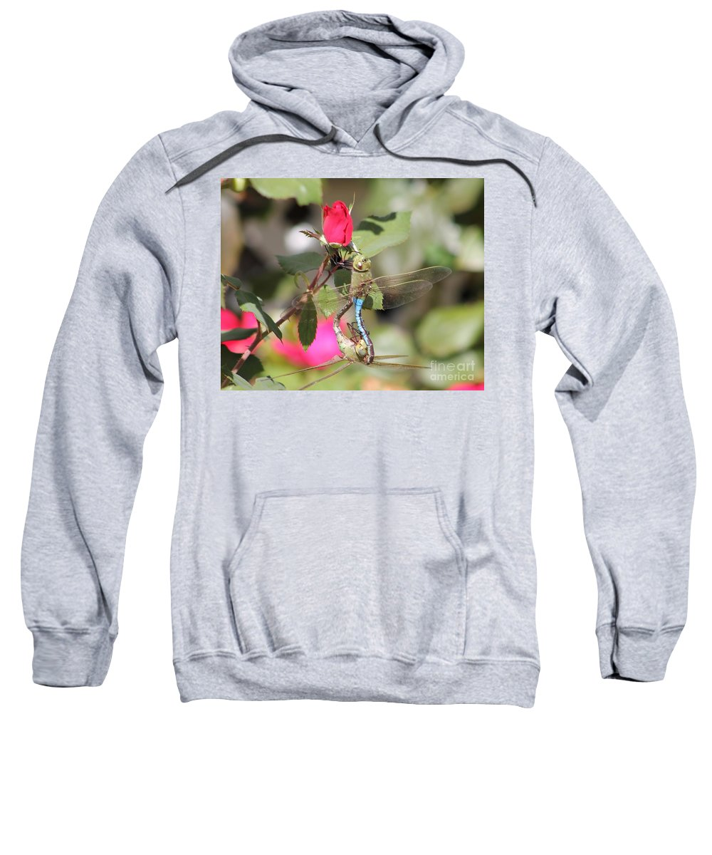 Dragonfly Sweatshirt featuring the photograph Mating Dragonfly by Michelle Powell