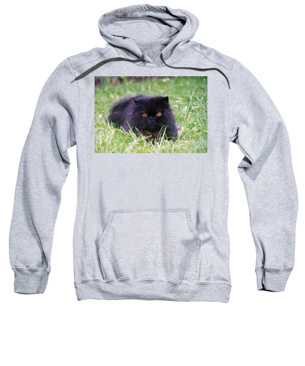 Black Persian Cat Sweatshirt featuring the photograph Merlin by John Chatterley