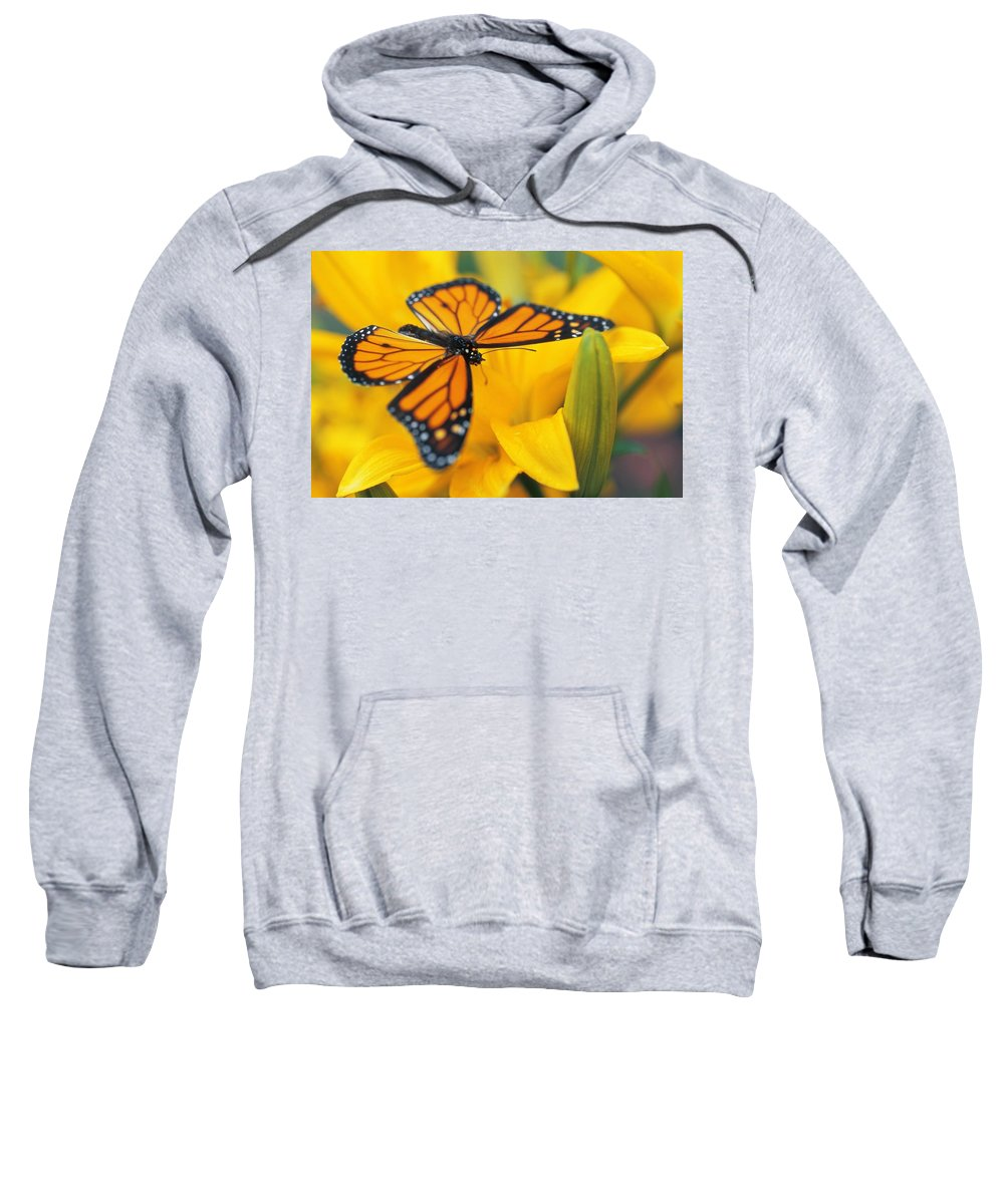 Beautiful Sweatshirt featuring the photograph Monarch Butterfly On Flower by Don Hammond