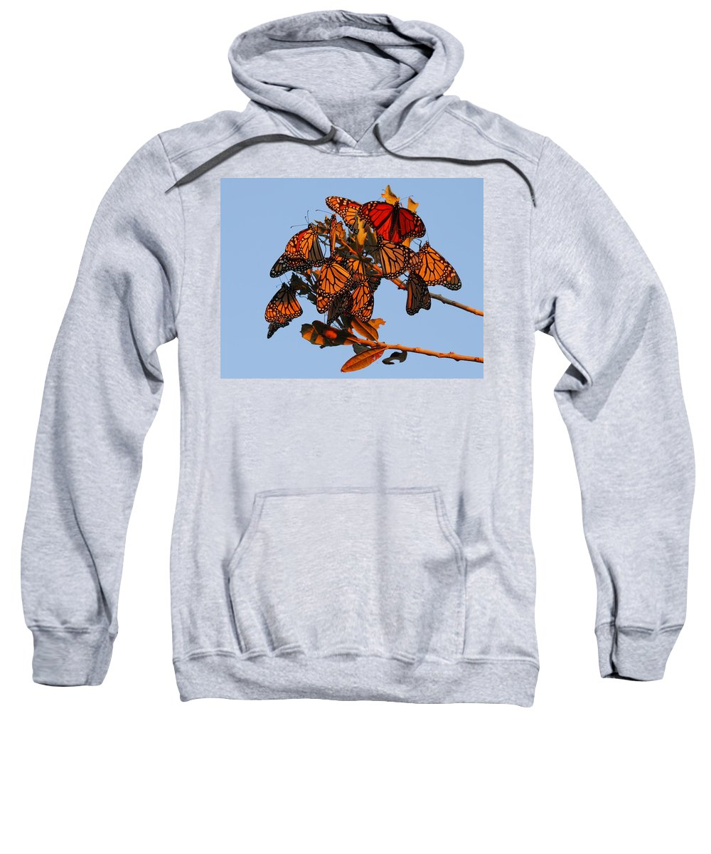 Monarch Butterfly Sweatshirt featuring the photograph Monarch Migration by Andrew McInnes