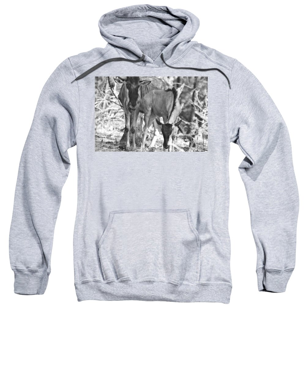 Blue Wildebeest Sweatshirt featuring the photograph Mother And Child V4 by Douglas Barnard