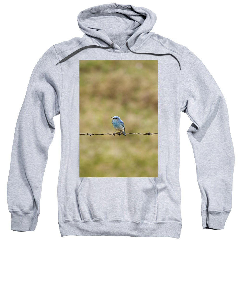 Alberta Sweatshirt featuring the photograph Mountain Bluebird On A Fence Wire by Philippe Widling
