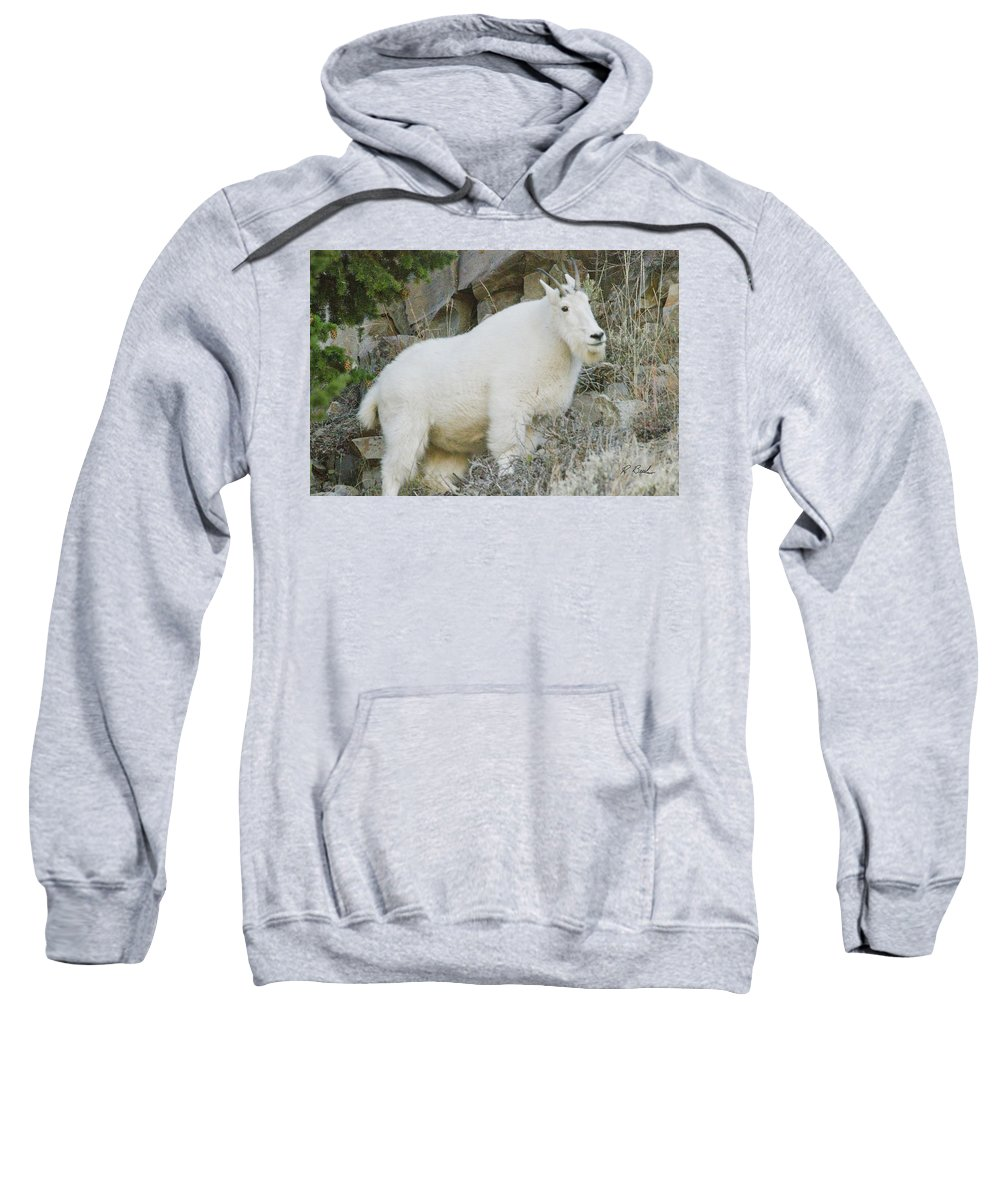 Mountain Goat Yellowstone National Park Sweatshirt featuring the photograph Mountain Goat by R Breslaw