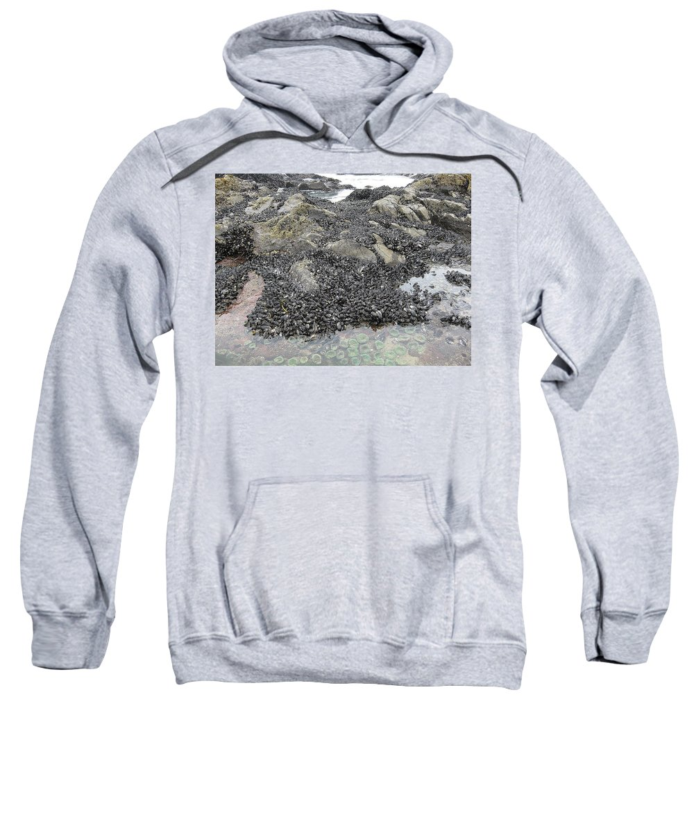 Mussels Sweatshirt featuring the photograph Mussels And Anemones by Linda Hutchins
