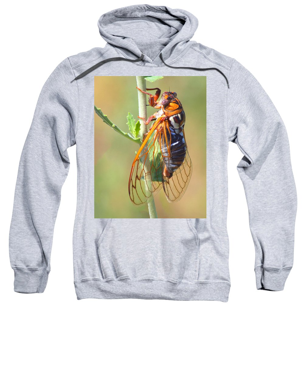 Cicada Sweatshirt featuring the photograph Noisy Cicada by Shane Bechler