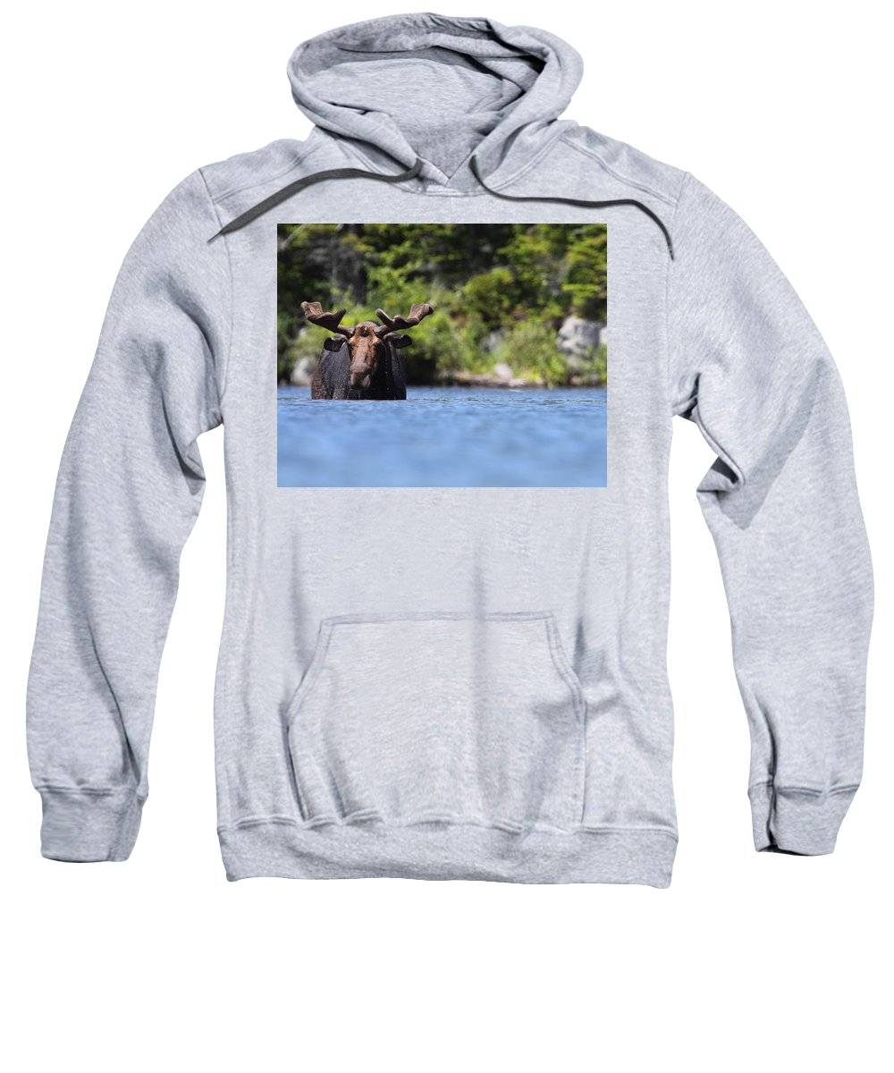 Moose Sweatshirt featuring the photograph North American Hippo II by Bruce J Robinson