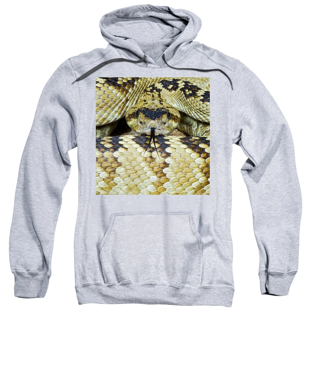Animals Sweatshirt featuring the photograph Northern Black-tailed Rattlesnake by Jack Goldfarb
