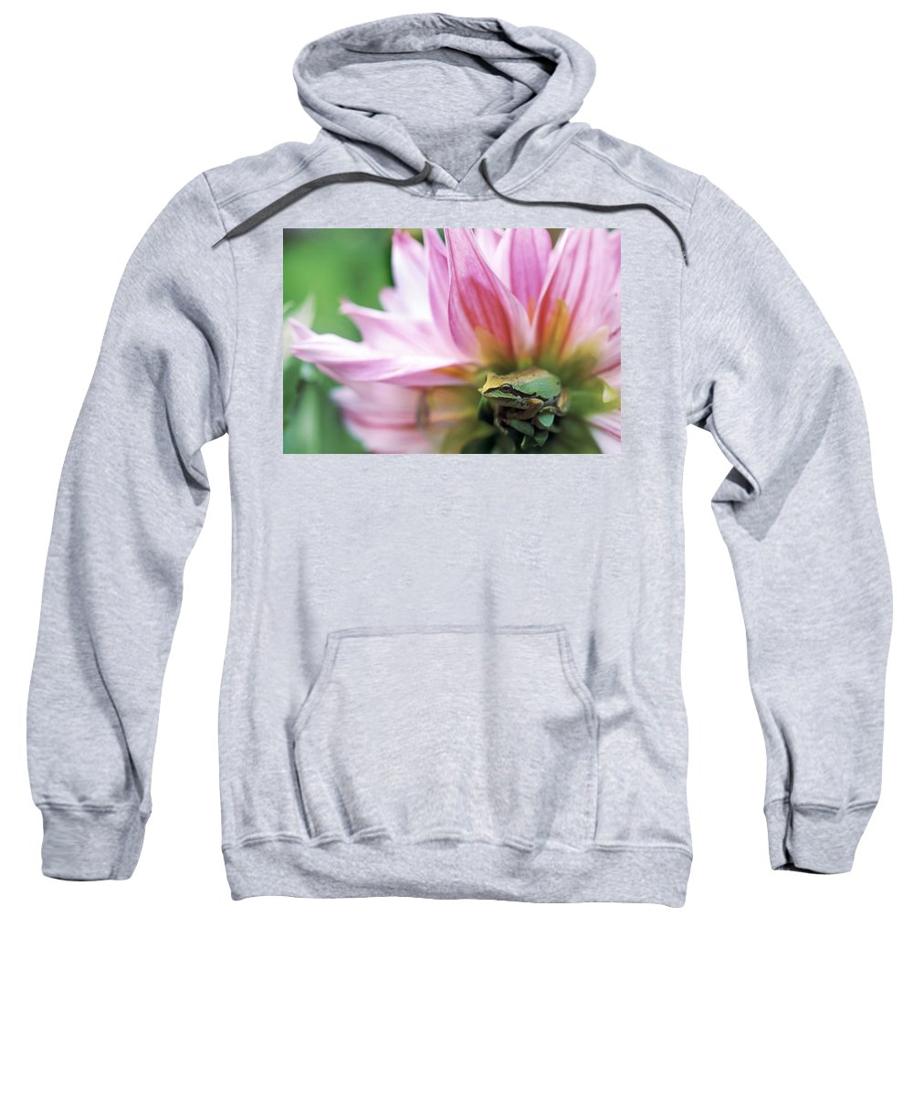 Bright Sweatshirt featuring the photograph Pacific Tree Frog In A Dahlia Flower by David Nunuk