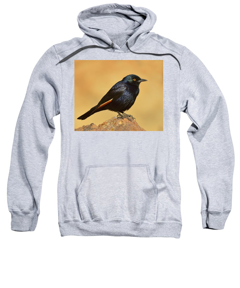 Pale-winged Starling Sweatshirt featuring the photograph Pale-winged Starling by Tony Beck