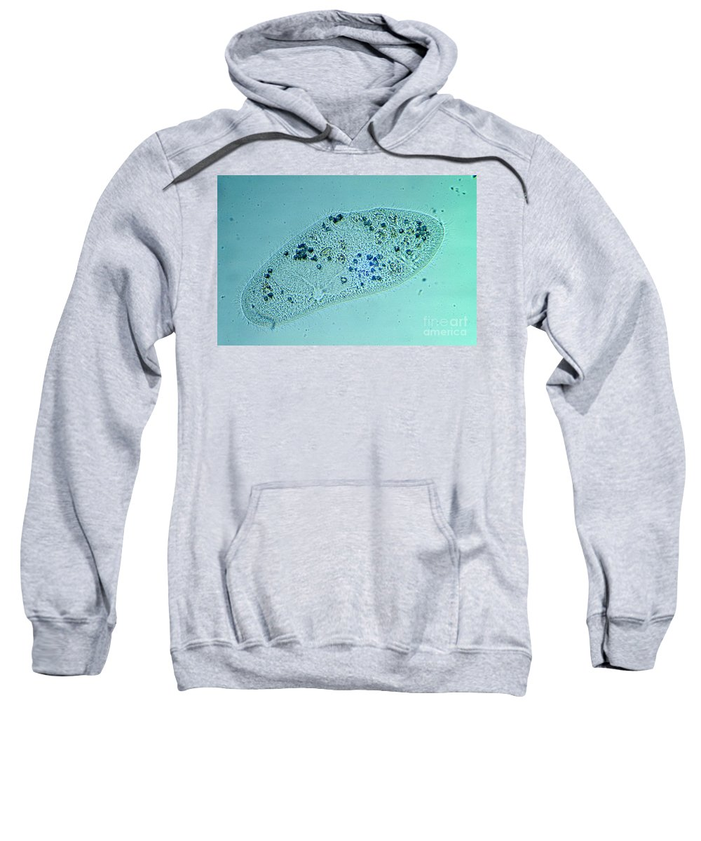 Paramecium Sweatshirt featuring the photograph Paramecium Caudatum by M. I. Walker