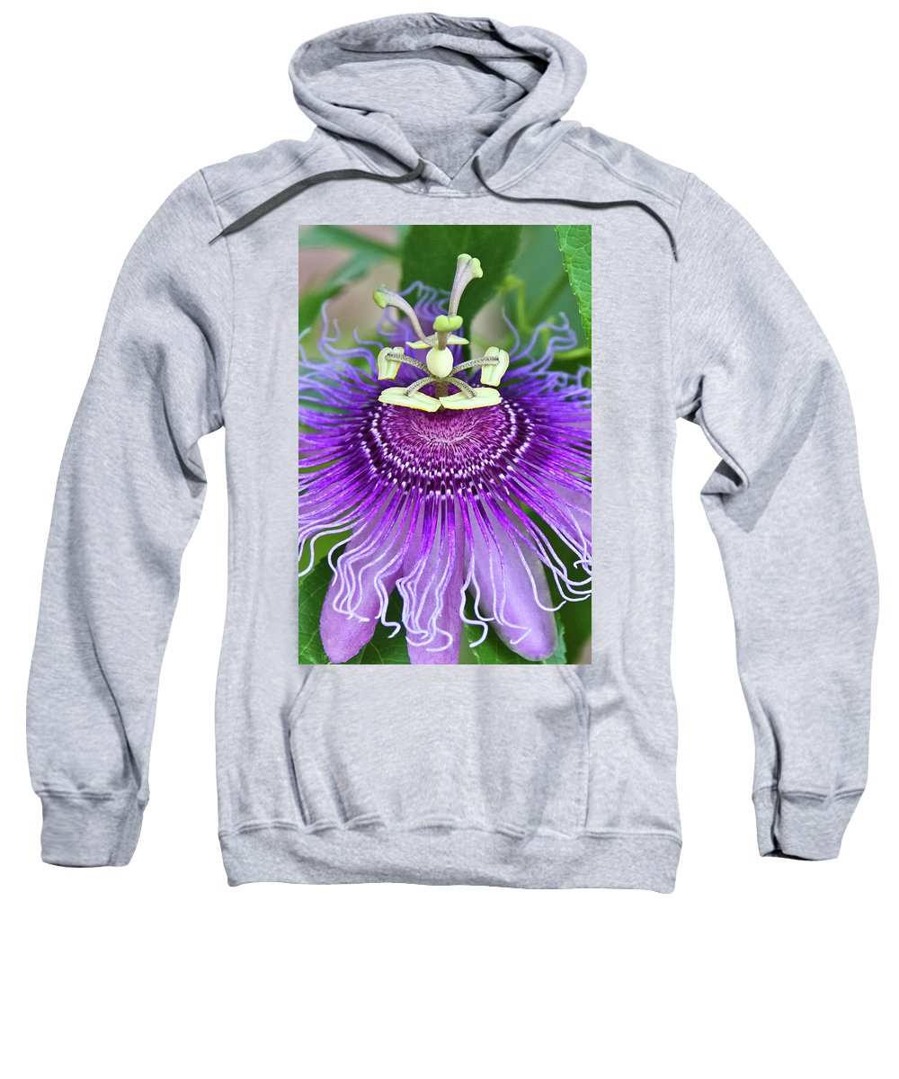 Cultivated Flowers - Plants Sweatshirt featuring the photograph Passion Flower by Albert Seger