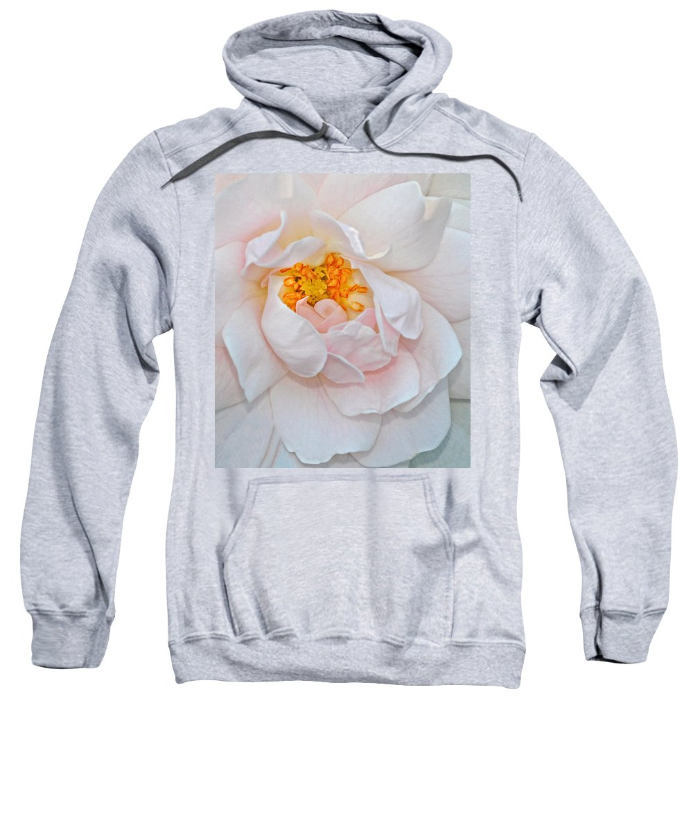 Rose Sweatshirt featuring the photograph Pastel Rose by Dave Mills