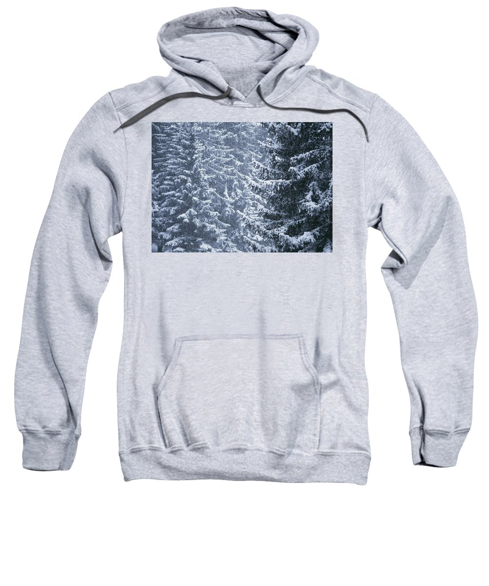 Winter Sweatshirt featuring the photograph Pine Trees Covered In Snow, Les Arcs by Axiom Photographic