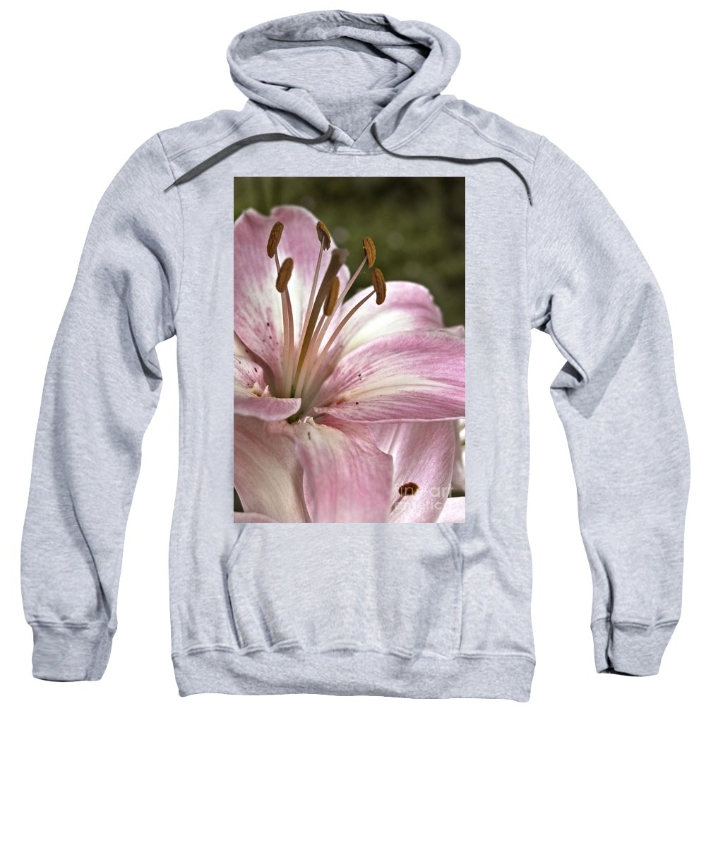 Agriculture Sweatshirt featuring the photograph Pink Asiatic Lily by Danielle Summa