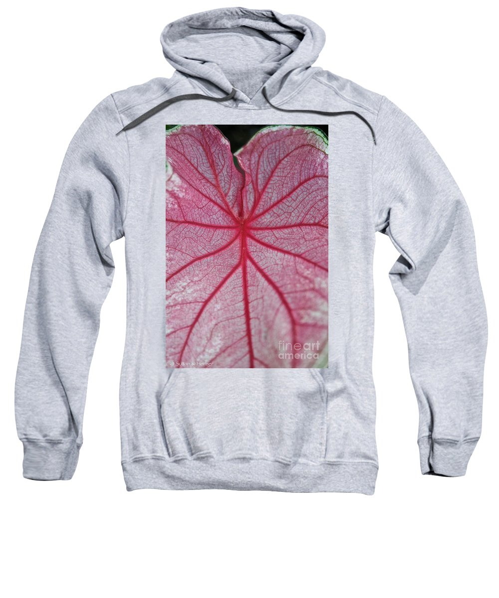 Plant Sweatshirt featuring the photograph Pink Veins by Susan Herber