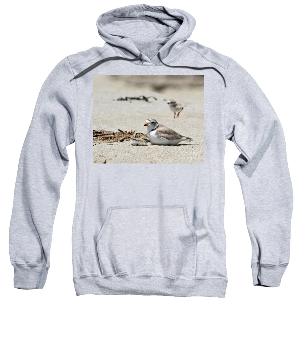 Plover Sweatshirt featuring the photograph Piping Plover Mom And Two Babies by Lloyd Alexander