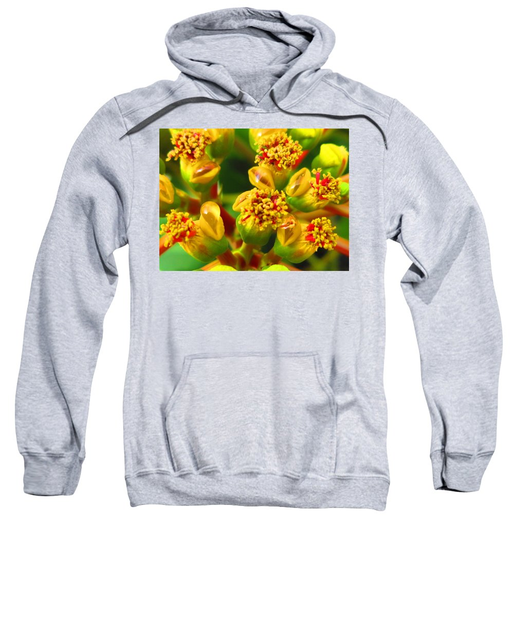 Close Up Sweatshirt featuring the photograph Poinsettia by Lisa Stanley