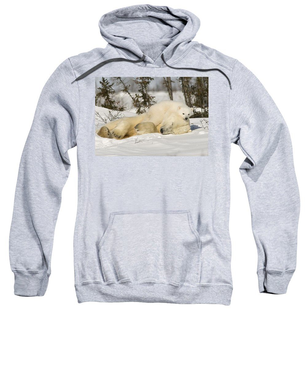 Bear Sweatshirt featuring the photograph Polar Bear With Cub In Snow by Robert Brown