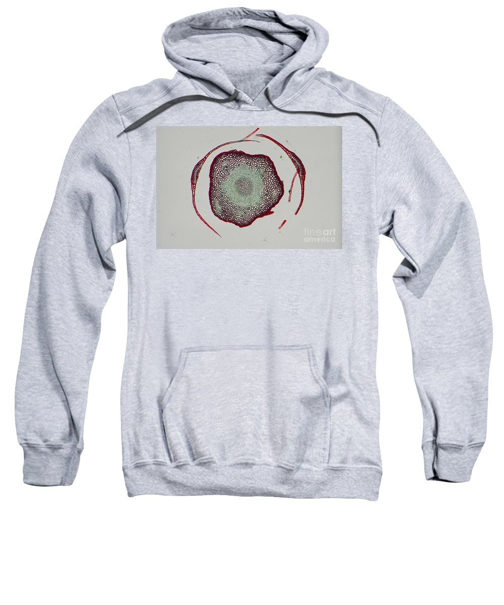 Plant Sweatshirt featuring the photograph Polytrichum by M. I. Walker