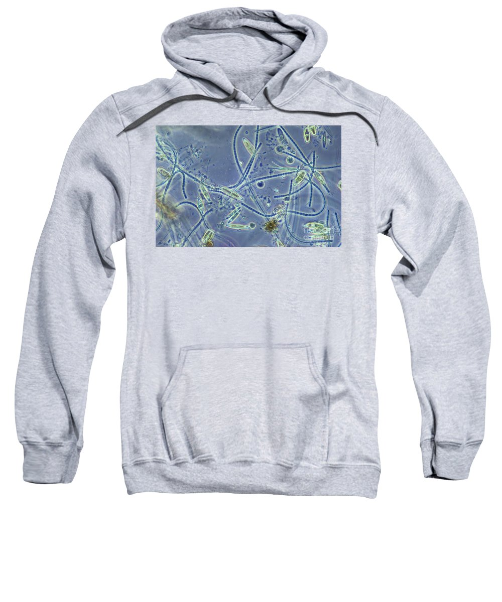 Science Sweatshirt featuring the photograph Pond Water Sample, Lm by M. I. Walker