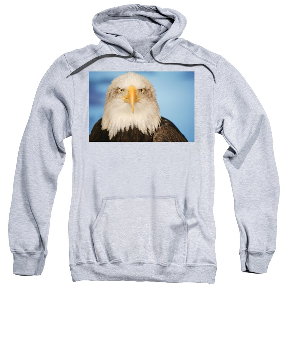 Horizontal Sweatshirt featuring the photograph Portrait Of A Bald Eagle by Don Hammond