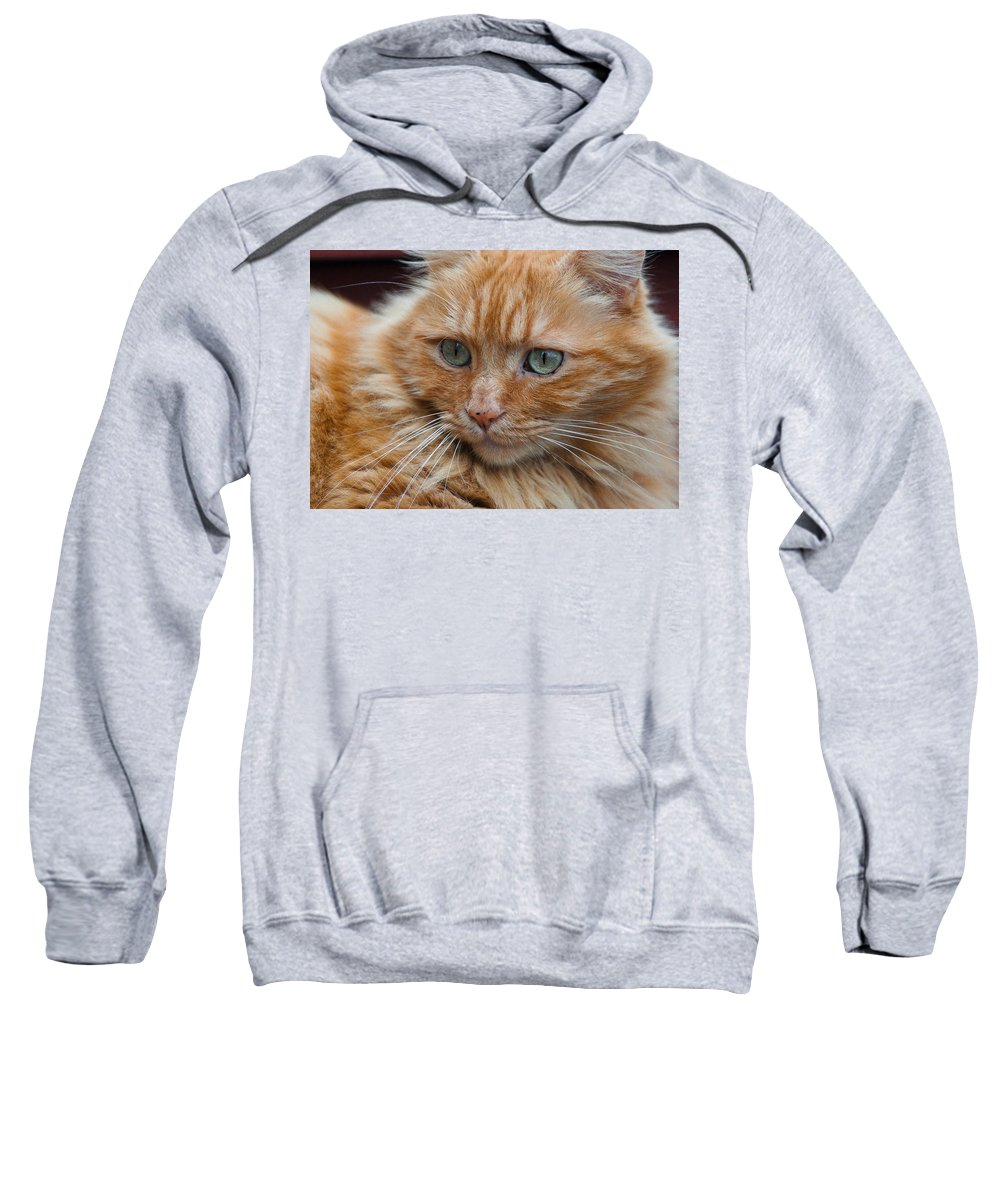 Cat Sweatshirt featuring the photograph Portrait Of An Orange Kitty by Greg Nyquist