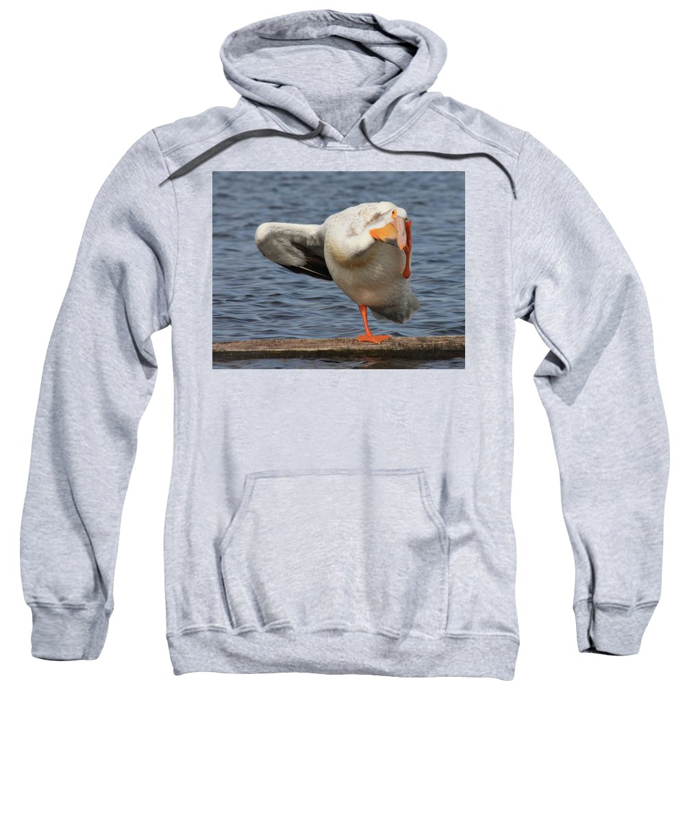 White Pelican Sweatshirt featuring the photograph Poser by Shane Bechler