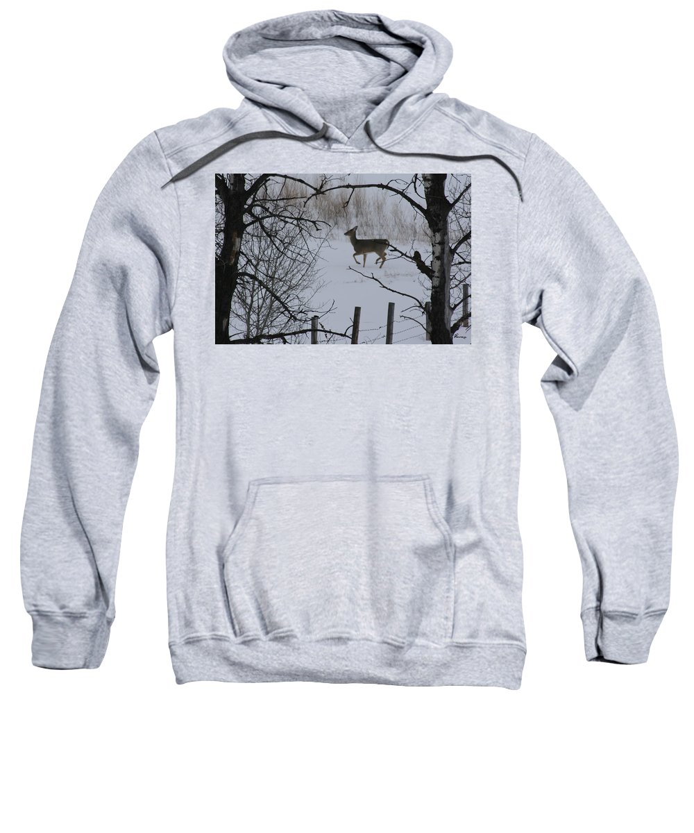 Wild Sweatshirt featuring the photograph Prance by Andrea Lawrence