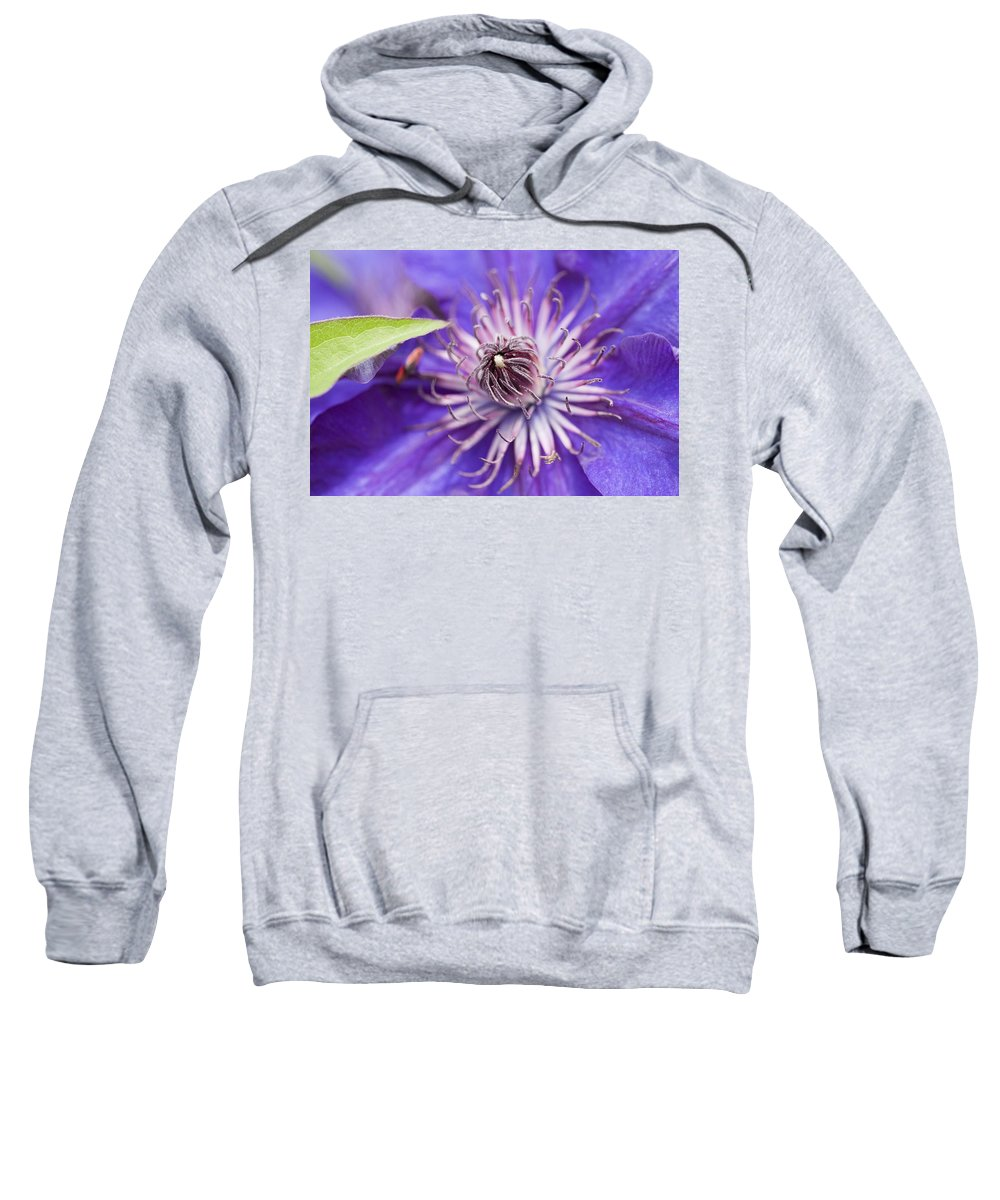 Clematis Sweatshirt featuring the photograph Pretty Purple Clematis by Kathy Clark