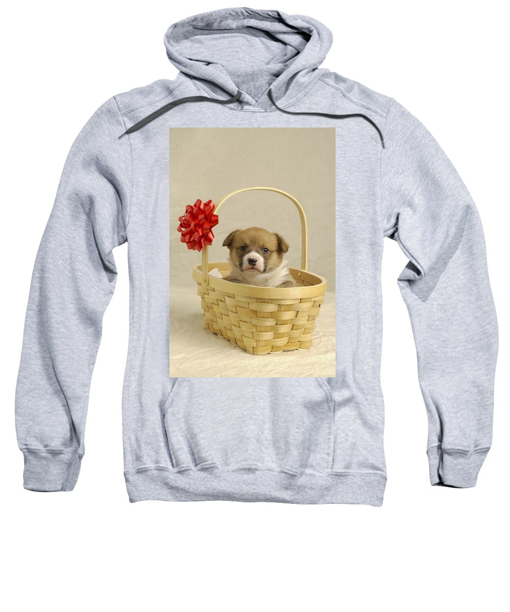 Animal Sweatshirt featuring the photograph Puppy In A Basket by Ron Nickel