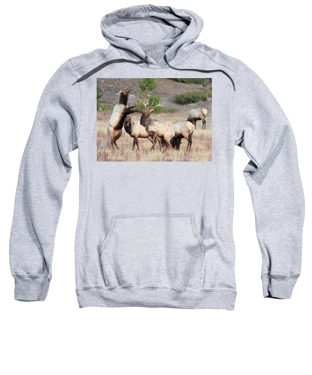 Elk Sweatshirt featuring the photograph Put Up Your Dukes by Shane Bechler