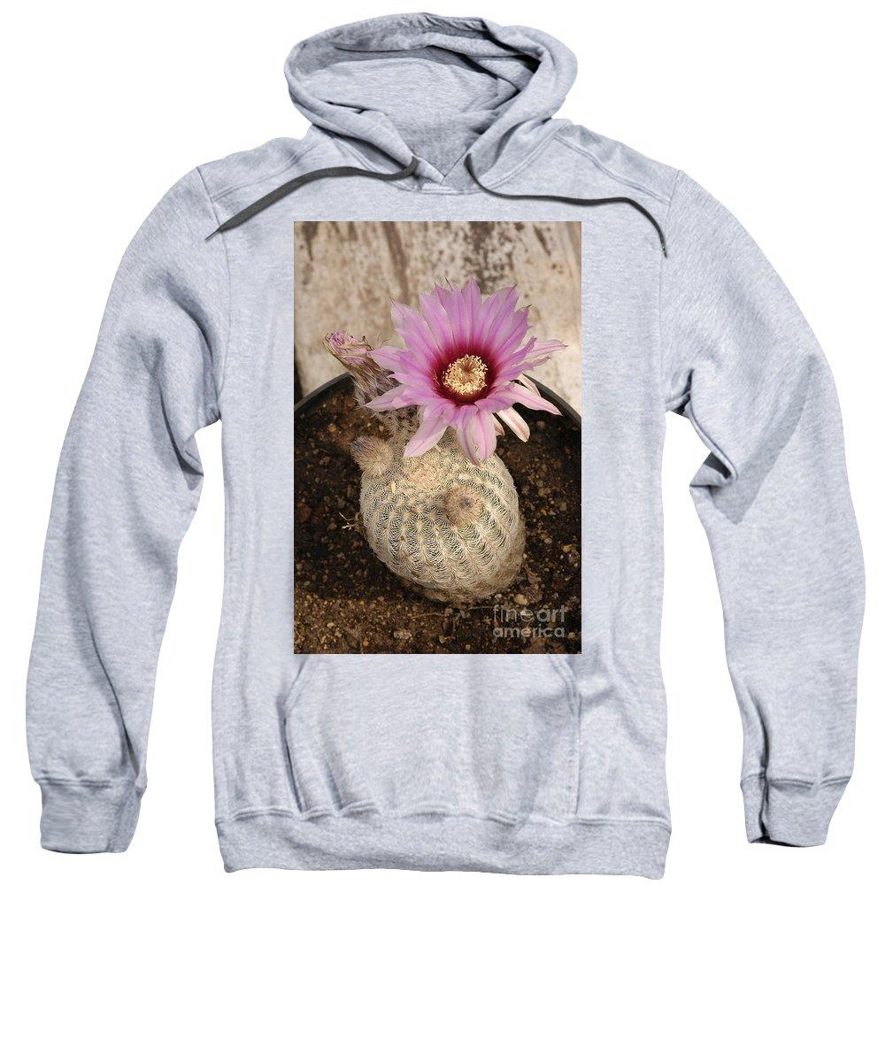 Cactus Sweatshirt featuring the photograph Rainbow Cactus by Raul Gonzalez Perez