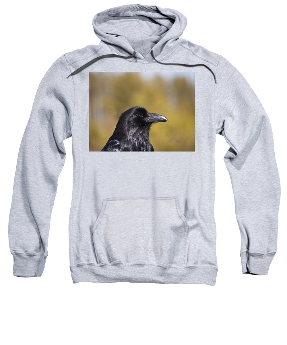 Raven Sweatshirt featuring the photograph Raven by Derek Holzapfel