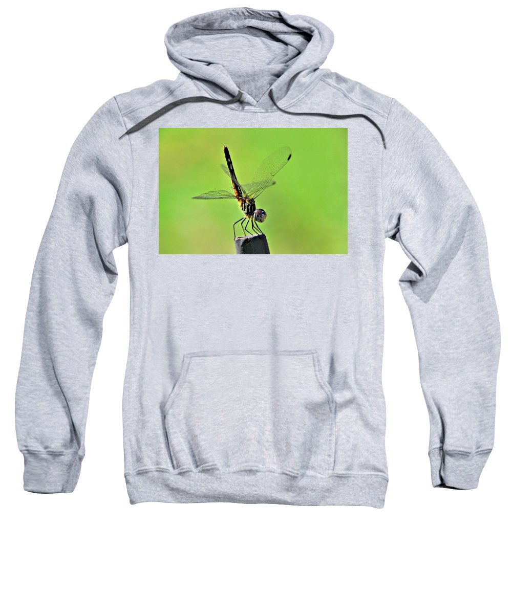 Dragonfly Sweatshirt featuring the photograph Ready For Departure by Floyd Menezes