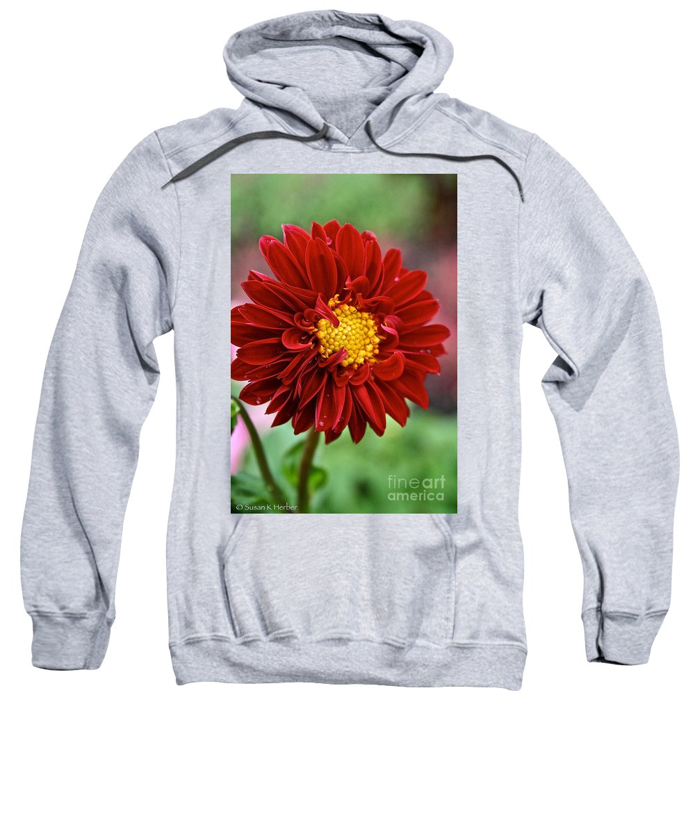 Floral Sweatshirt featuring the photograph Red Dahlia Unfurled by Susan Herber