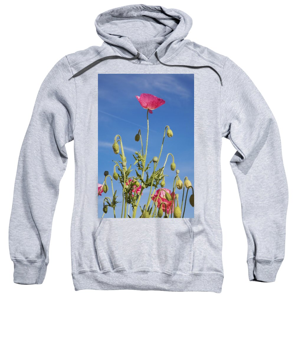 Craig Sweatshirt featuring the photograph Red Flower Against Blue Sky by Craig Tuttle