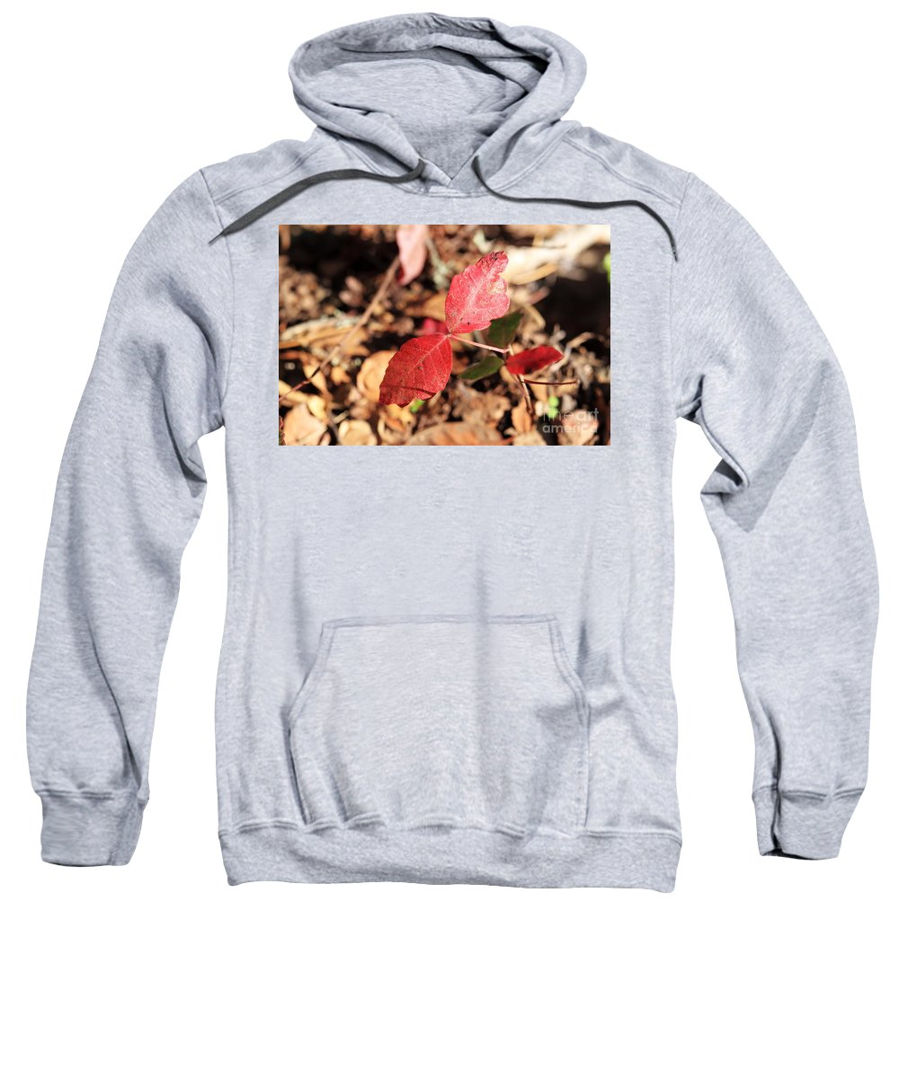 Red Sweatshirt featuring the photograph Red Leaves by Henrik Lehnerer